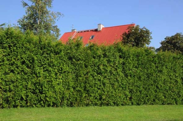 High hedges
